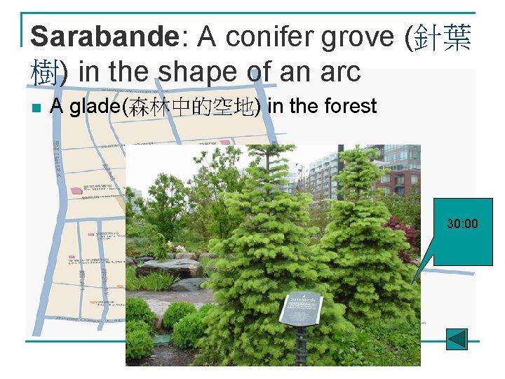 Sarabande: A conifer grove (針葉 樹) in the shape of an arc n A