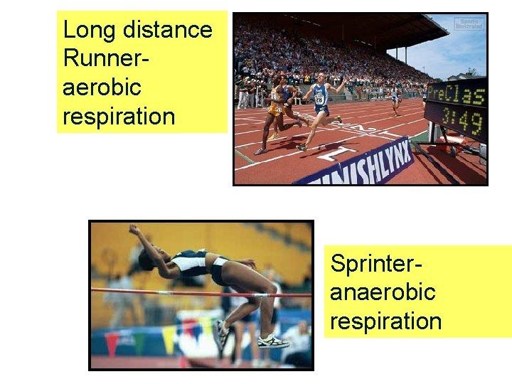 Long distance Runner- aerobic respiration Sprinter- anaerobic respiration