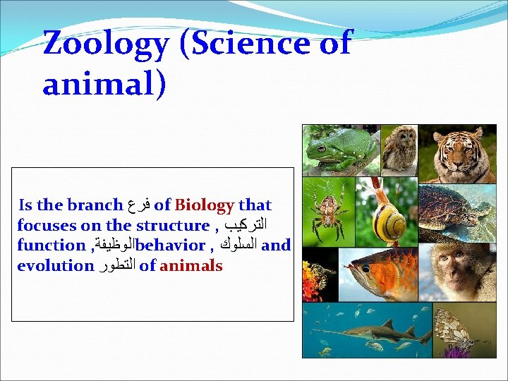 Zoology (Science of animal) Is the branch ﻓﺮﻉ of Biology that focuses on the