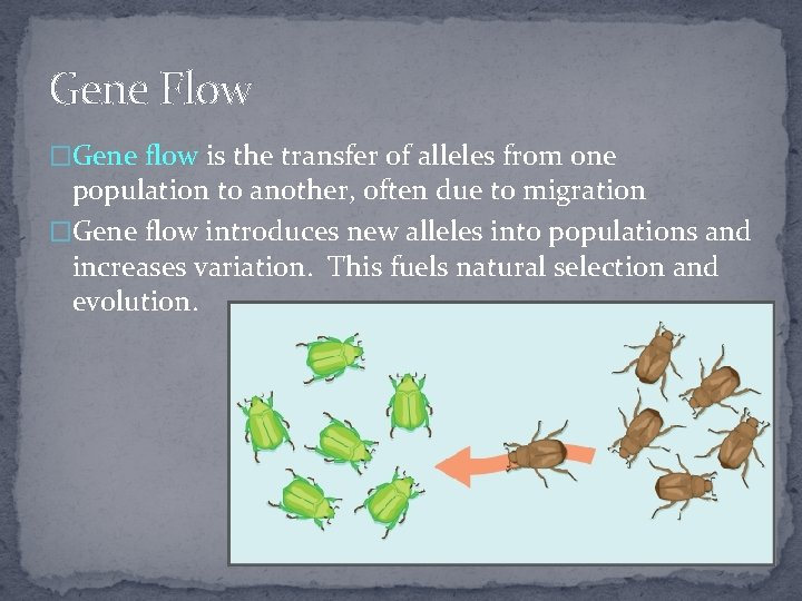 Gene Flow �Gene flow is the transfer of alleles from one population to another,
