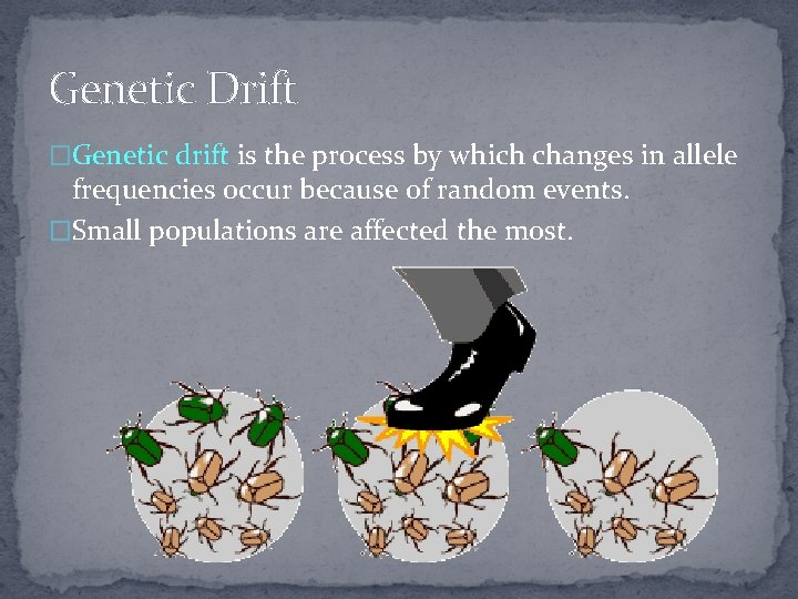 Genetic Drift �Genetic drift is the process by which changes in allele frequencies occur