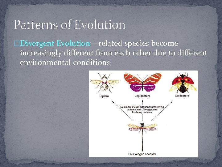 Patterns of Evolution �Divergent Evolution—related species become increasingly different from each other due to