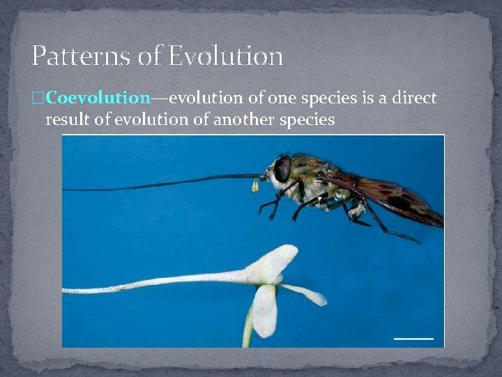 Patterns of Evolution �Coevolution—evolution of one species is a direct result of evolution of