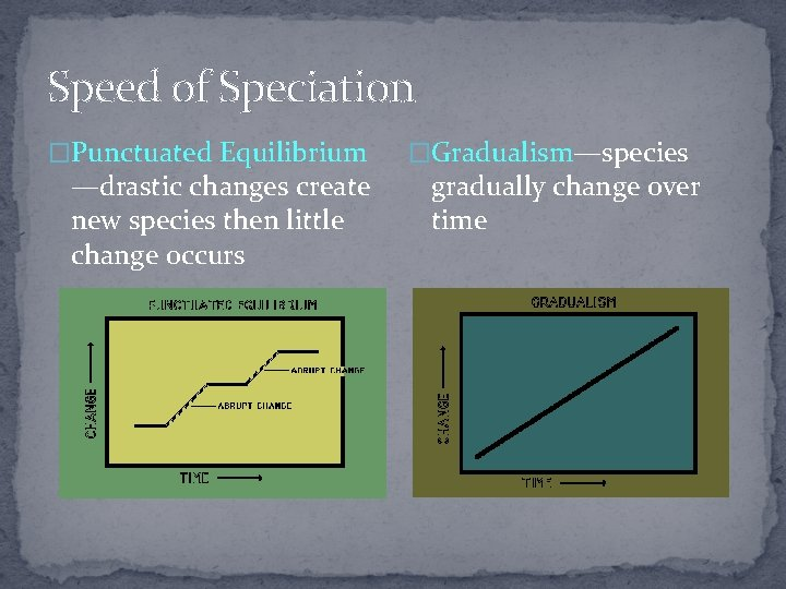 Speed of Speciation �Punctuated Equilibrium —drastic changes create new species then little change occurs