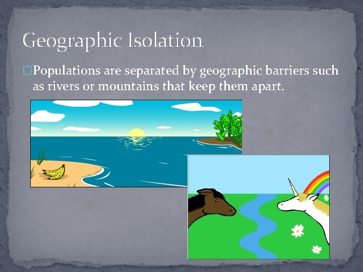 Geographic Isolation �Populations are separated by geographic barriers such as rivers or mountains that