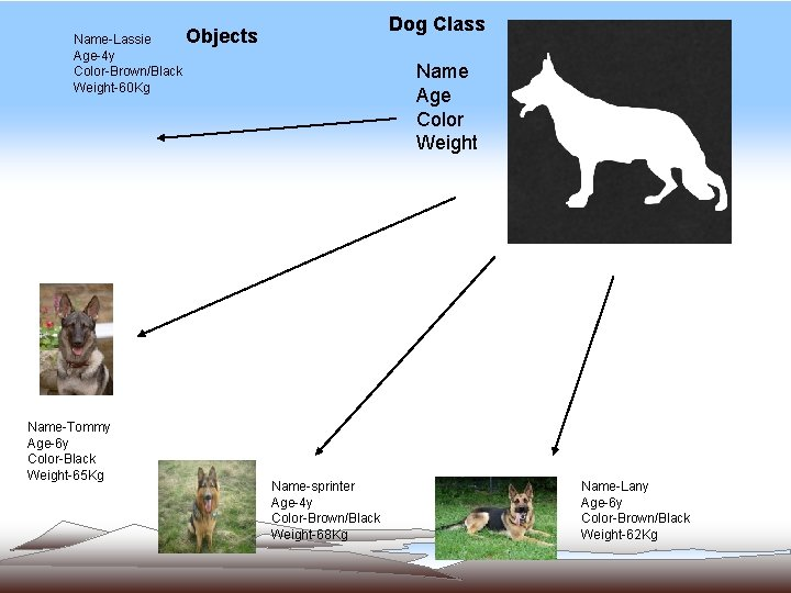 Dog Class Objects Name-Lassie Age-4 y Color-Brown/Black Weight-60 Kg Name-Tommy Age-6 y Color-Black Weight-65