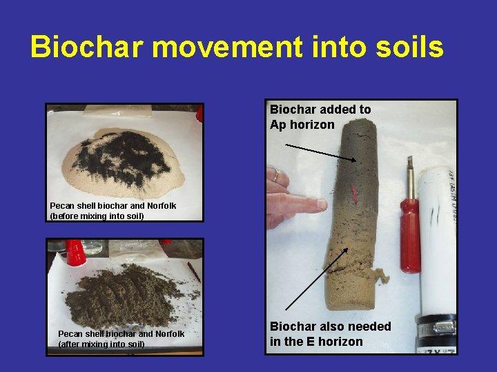 Biochar movement into soils Biochar added to Ap horizon Pecan shell biochar and Norfolk