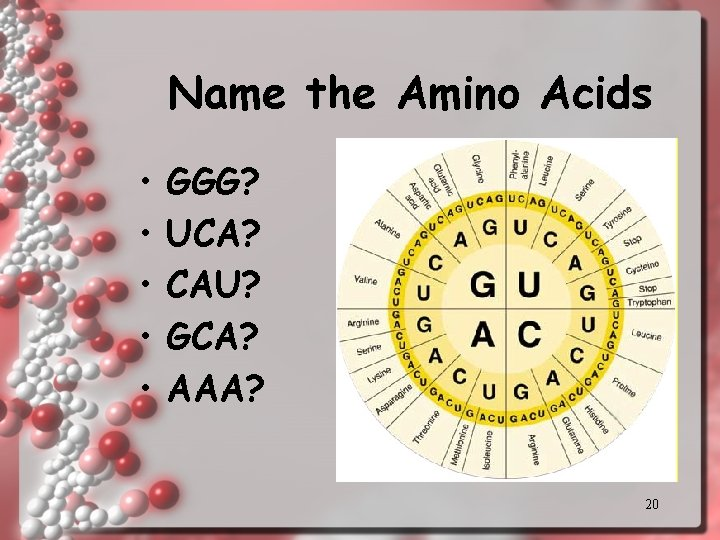 Name the Amino Acids • • • GGG? UCA? CAU? GCA? AAA? 20