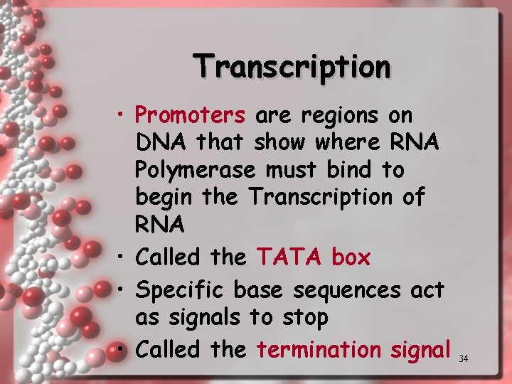 Transcription • Promoters are regions on DNA that show where RNA Polymerase must bind