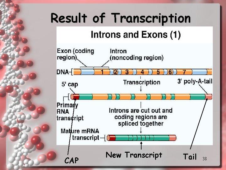 Result of Transcription CAP New Transcript Tail 38