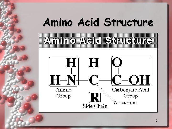 Amino Acid Structure 5