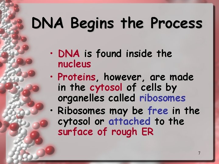 DNA Begins the Process • DNA is found inside the nucleus • Proteins, however,