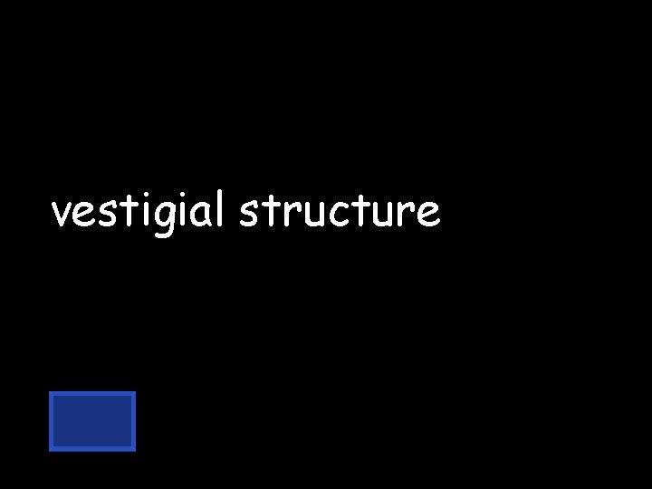vestigial structure