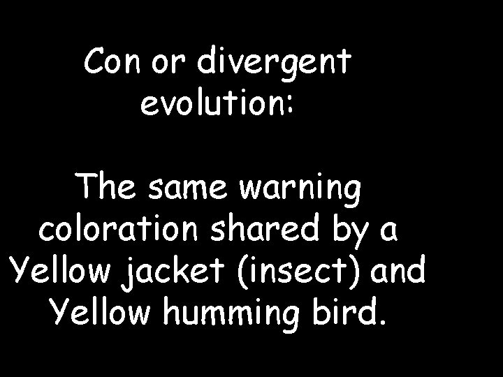 Con or divergent evolution: The same warning coloration shared by a Yellow jacket (insect)