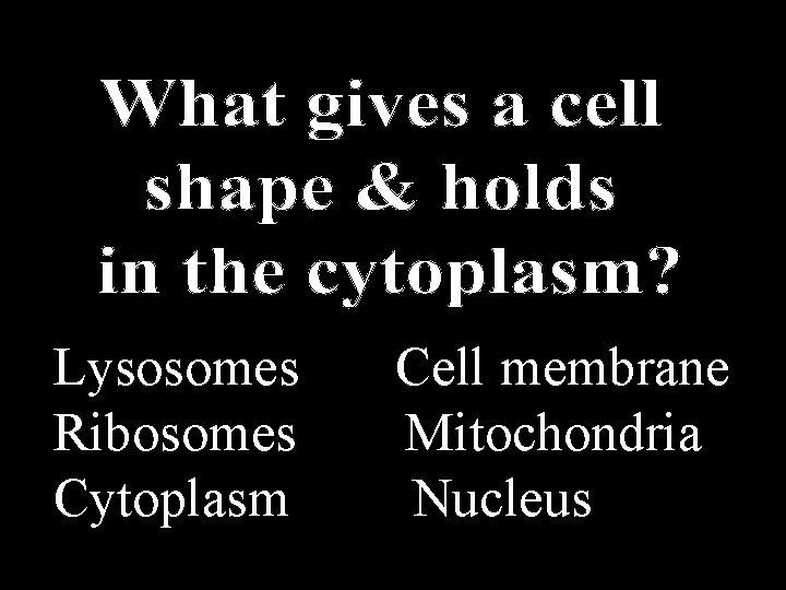 Lysosomes Cell membrane Ribosomes Mitochondria Cytoplasm Nucleus