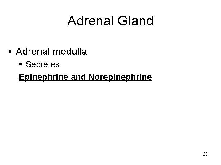 Adrenal Gland § Adrenal medulla § Secretes Epinephrine and Norepinephrine 20
