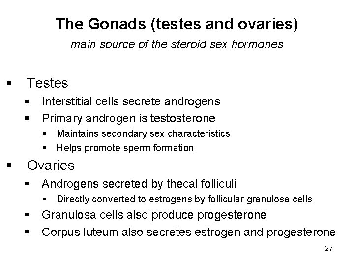 The Gonads (testes and ovaries) main source of the steroid sex hormones § Testes