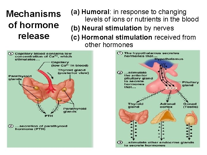Mechanisms of hormone release (a) Humoral: in response to changing levels of ions or