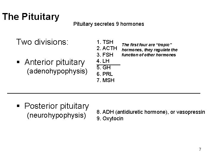 The Pituitary secretes 9 hormones Two divisions: § Anterior pituitary (adenohypophysis) 1. TSH The