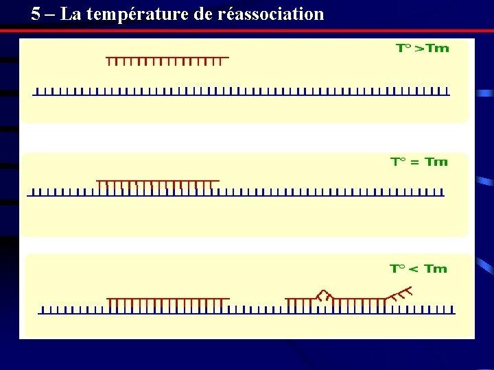 5 – La température de réassociation