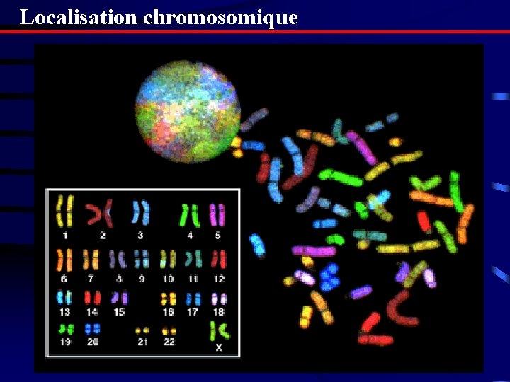 Localisation chromosomique
