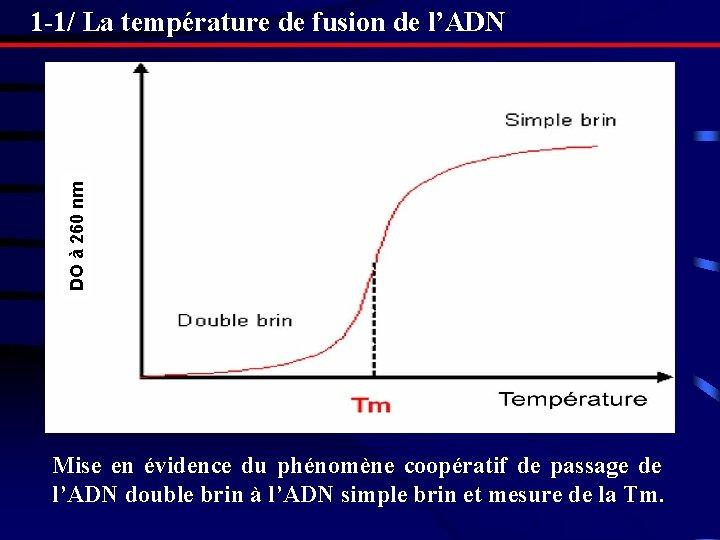 DO à 260 nm 1 -1/ La température de fusion de l'ADN Mise en