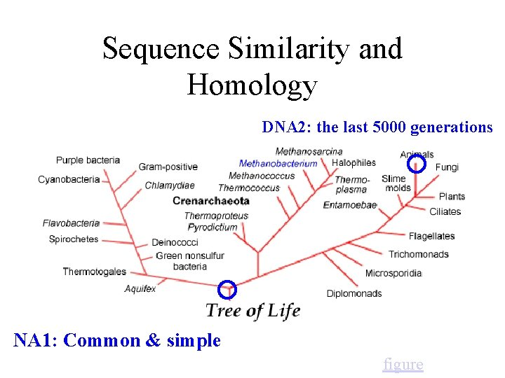 Sequence Similarity and Homology DNA 2: the last 5000 generations NA 1: Common &
