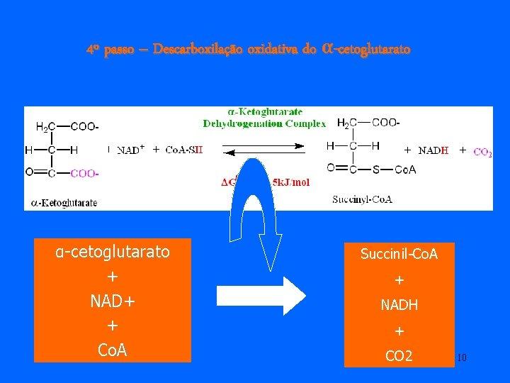 4º passo – Descarboxilação oxidativa do α-cetoglutarato + NAD+ + Co. A Succinil-Co. A