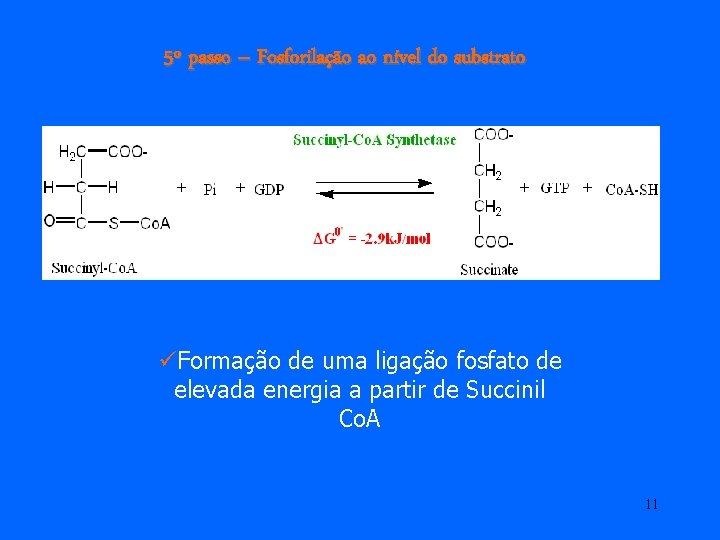 5º passo – Fosforilação ao nível do substrato üFormação de uma ligação fosfato de