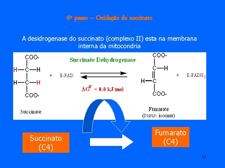 6º passo – Oxidação do succinato A desidrogenase do succinato (complexo II) esta na