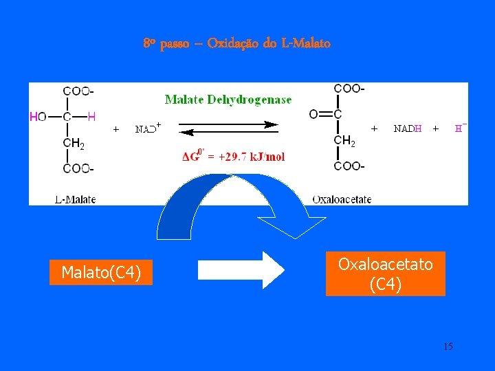 8º passo – Oxidação do L-Malato(C 4) Oxaloacetato (C 4) 15
