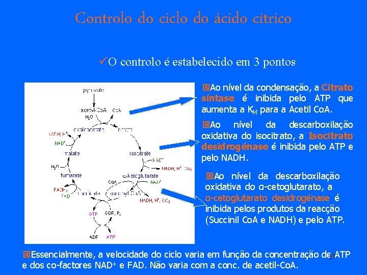Controlo do ciclo do ácido cítrico üO controlo é estabelecido em 3 pontos ýAo