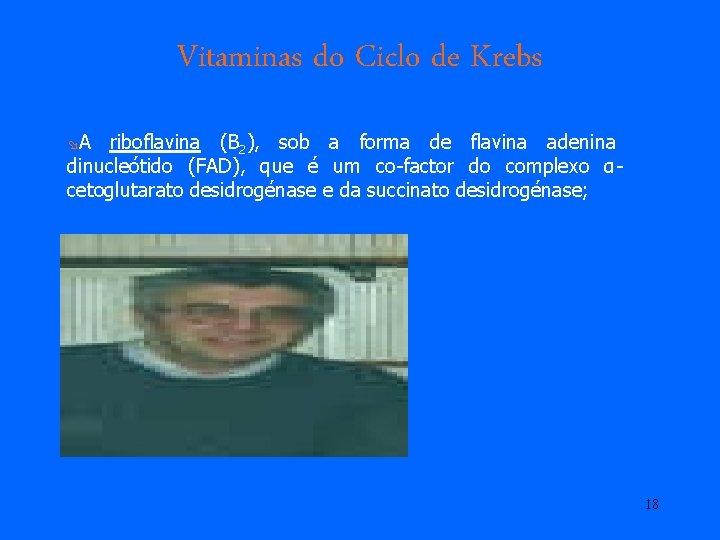 Vitaminas do Ciclo de Krebs øA riboflavina (B 2), sob a forma de flavina