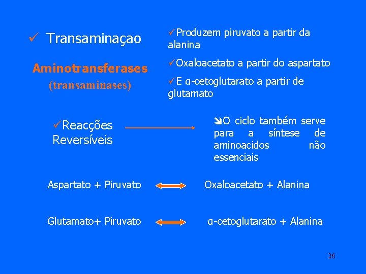ü Transaminaçao Aminotransferases (transaminases) üReacções Reversíveis üProduzem piruvato a partir da alanina üOxaloacetato a