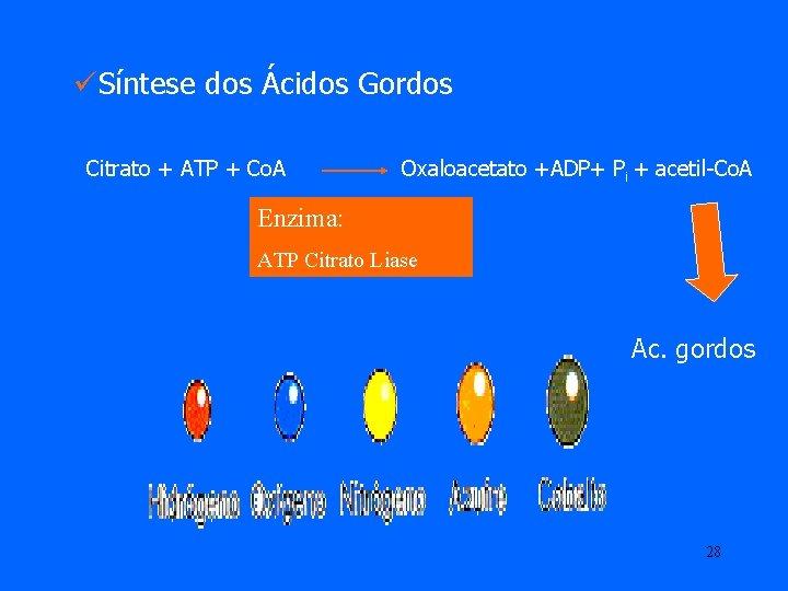 üSíntese dos Ácidos Gordos Citrato + ATP + Co. A Oxaloacetato +ADP+ Pi +