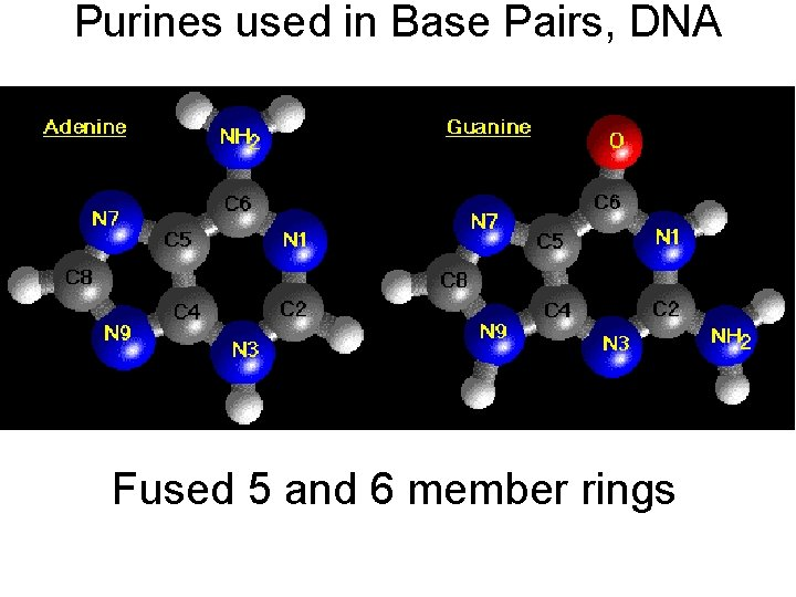 Purines used in Base Pairs, DNA Fused 5 and 6 member rings