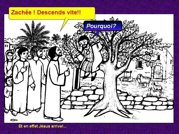 ZACHEE ET LA VOLONTE DE RENCONTRER JESUS-CHRIST - LA VÉRITÉ VOUS RENDRA LIBRES