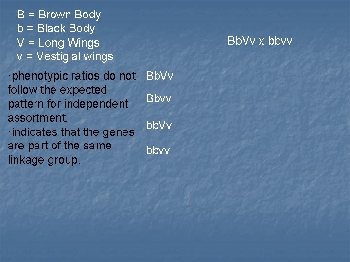 B = Brown Body b = Black Body V = Long Wings v =