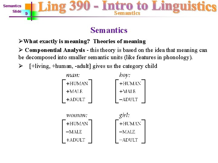 Semantics Slide 9 Semantics ØWhat exactly is meaning? Theories of meaning Ø Componential Analysis
