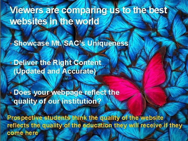 Viewers are comparing us to the best websites in the world • Showcase Mt.