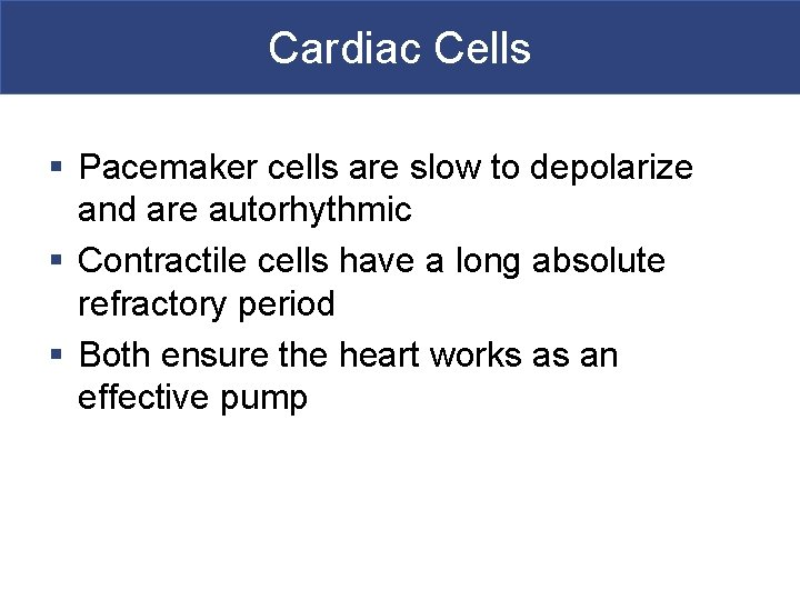 Cardiac Cells § Pacemaker cells are slow to depolarize and are autorhythmic § Contractile