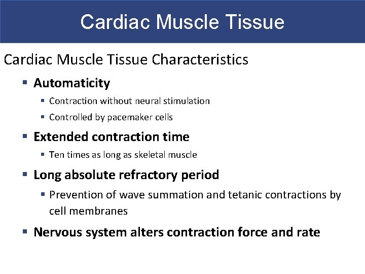 Cardiac Muscle Tissue Characteristics § Automaticity § Contraction without neural stimulation § Controlled by