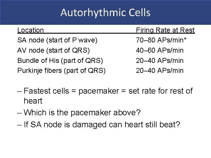 Autorhythmic Cells Location SA node (start of P wave) AV node (start of QRS)