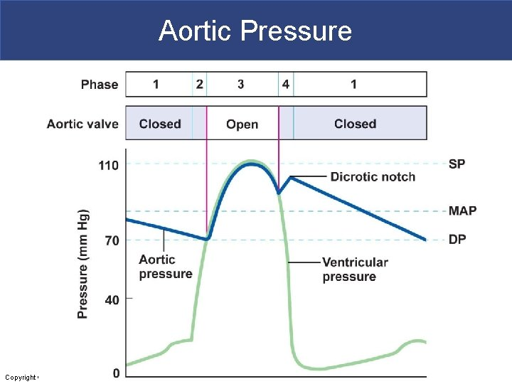 Aortic Pressure Copyright © 2011 Pearson Education, Inc.