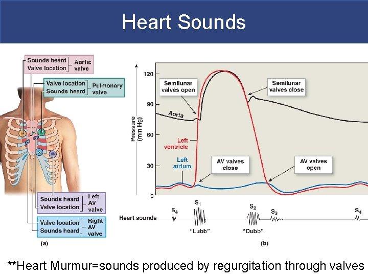 Heart Sounds **Heart Murmur=sounds produced by regurgitation through valves Copyright © 2011 Pearson Education,