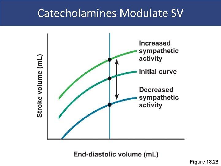 Catecholamines Modulate SV Figure 13. 29