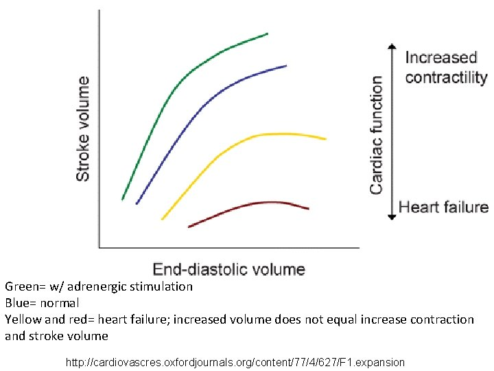 Green= w/ adrenergic stimulation Blue= normal Yellow and red= heart failure; increased volume does