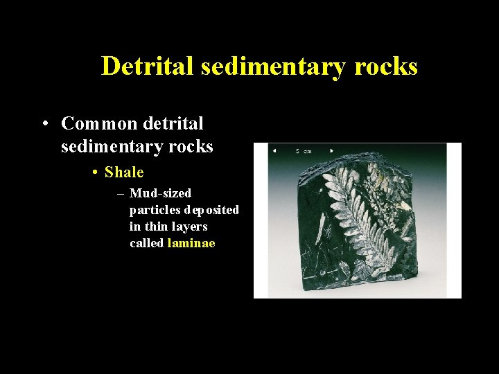 Detrital sedimentary rocks • Common detrital sedimentary rocks • Shale – Mud-sized particles deposited