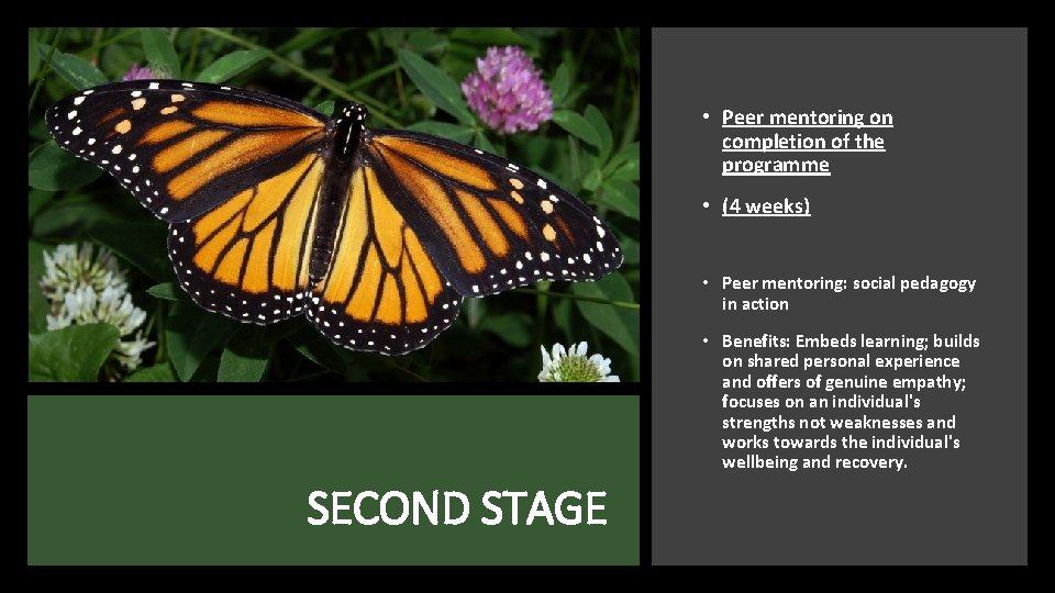 • Peer mentoring on completion of the programme • (4 weeks) • Peer