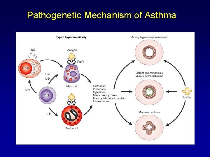 Pathogenetic Mechanism of Asthma